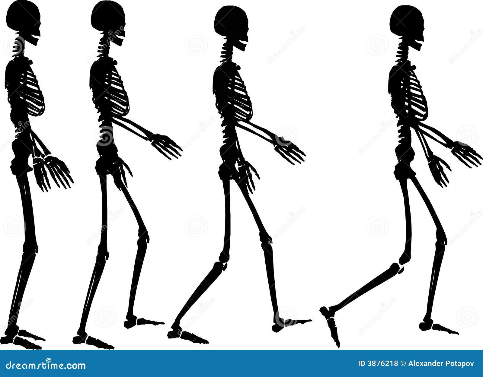 Punto di scheletro