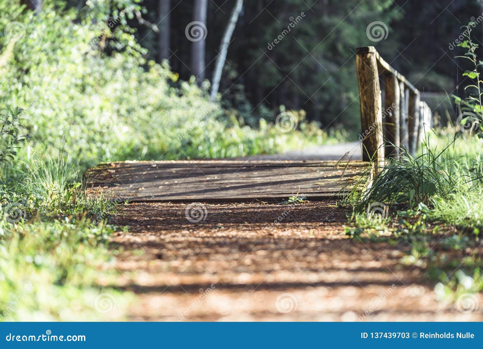 Punto di vista di Forest Road, dirigersi più profonda nel legno su Sunny Summer Day, immagine parzialmente vaga con spazio libero