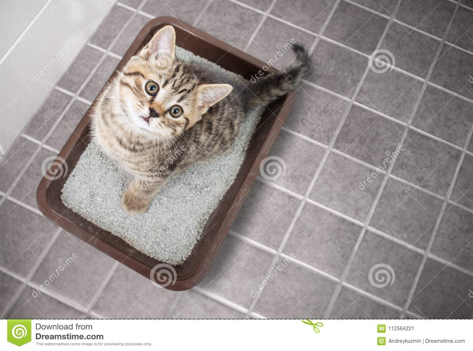 Cestini Rifiuti Da Bagno : Punto di vista superiore del gatto che si siede in cestino per i