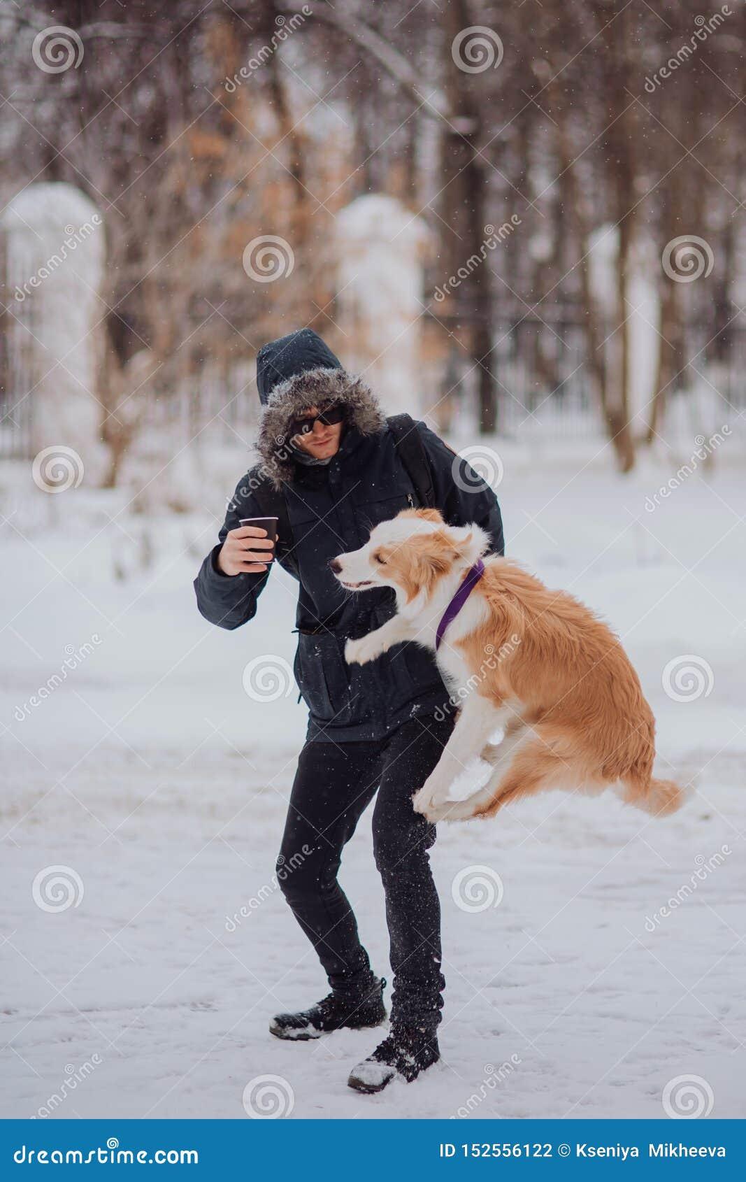 Puppey border collie för hund för manutbildningsbanhoppning i vinter Sn?a dag