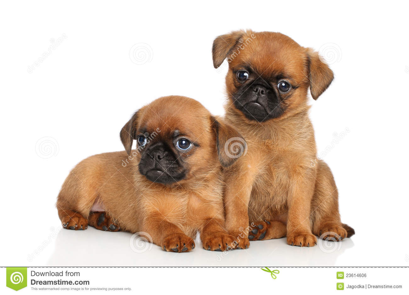 puppies stock photo. image of pedigreed, little, friends - 23614606