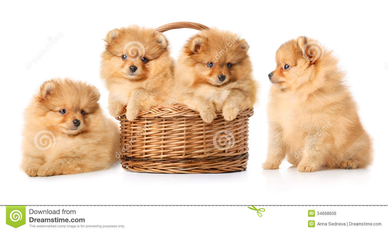 Puppies in a basket royalty free stock image image 34668606