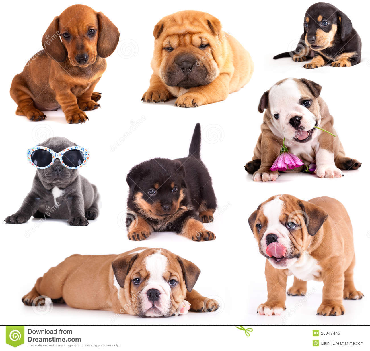 Puppies of different breeds stock image image of for Types of dogs with photos