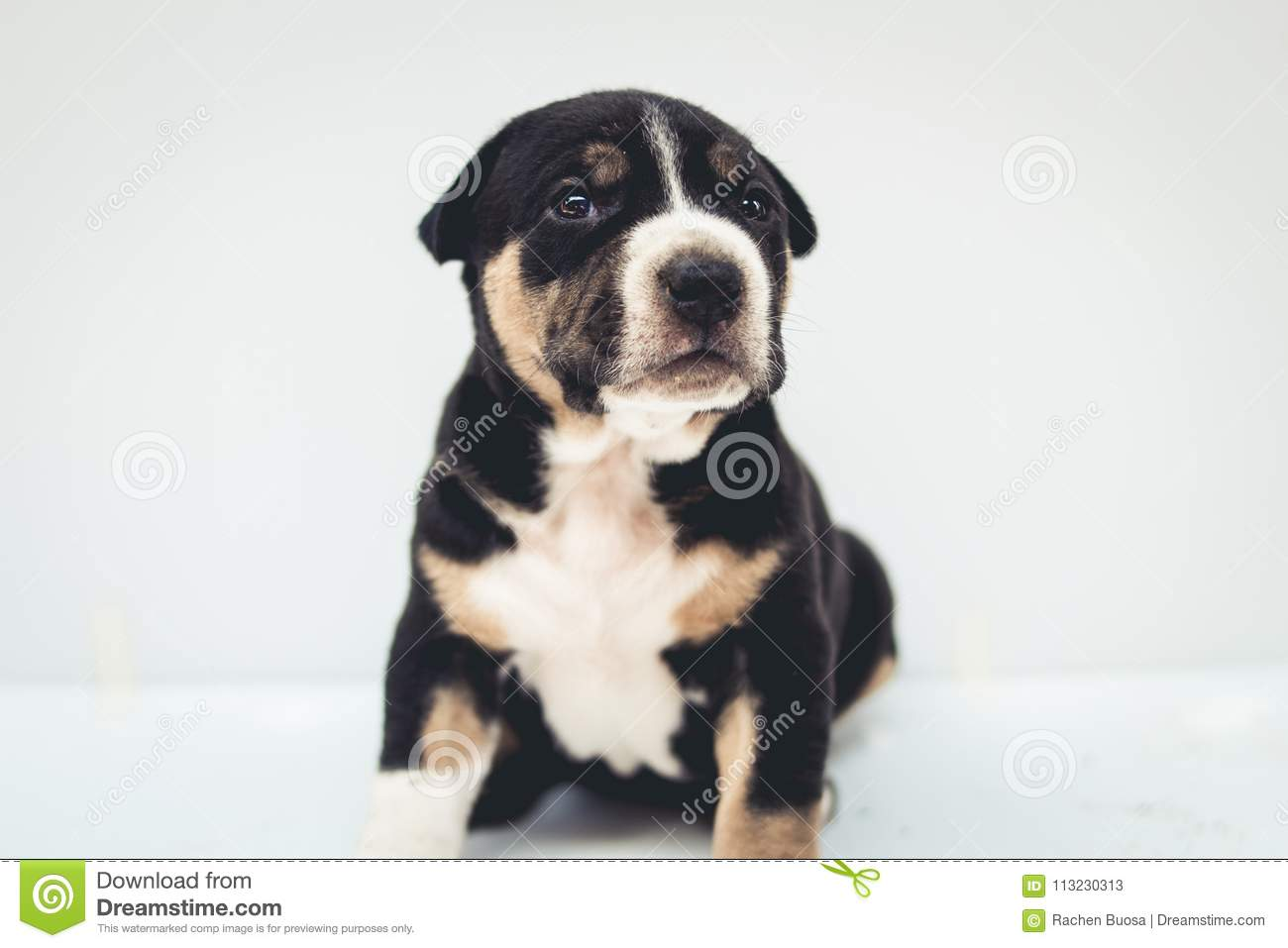 Puppies dog crossbred cute dog isolated