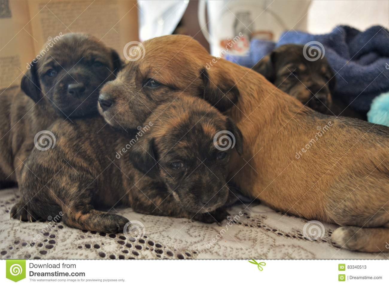 Puppies Stock Image Image Of Birth Jamaica Forest 83340513
