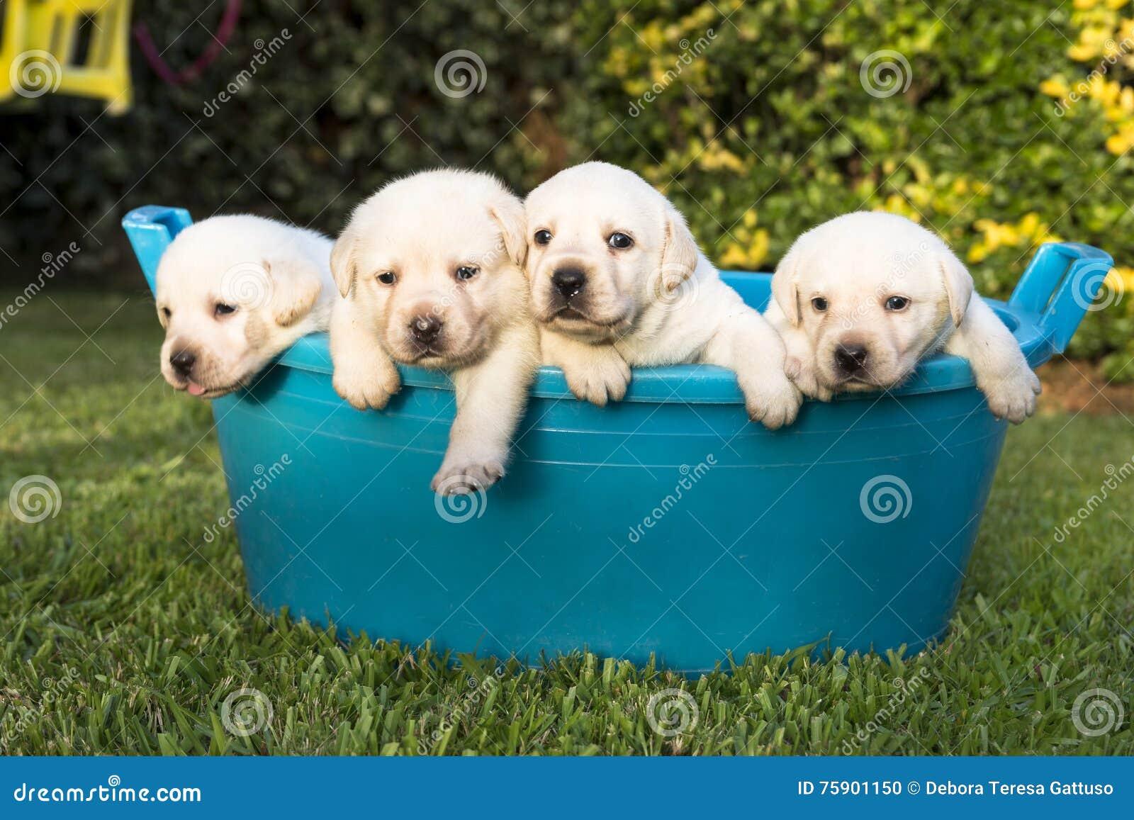 Puppies having a summer bath