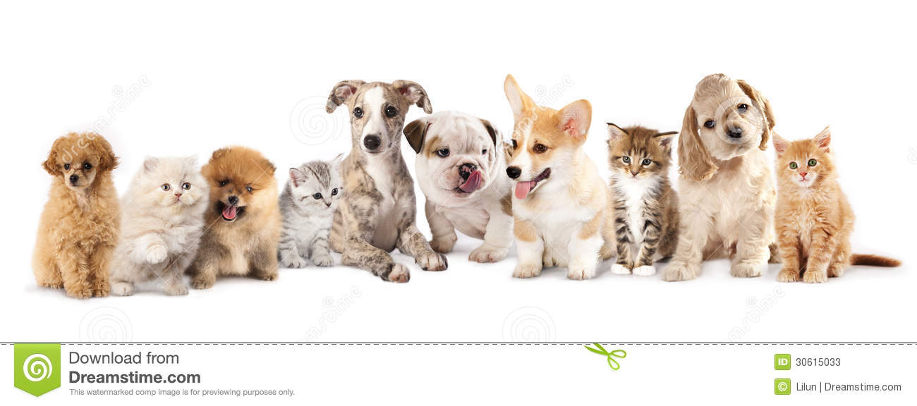 Puppies And Kitties Winamp Shoutcast Forums