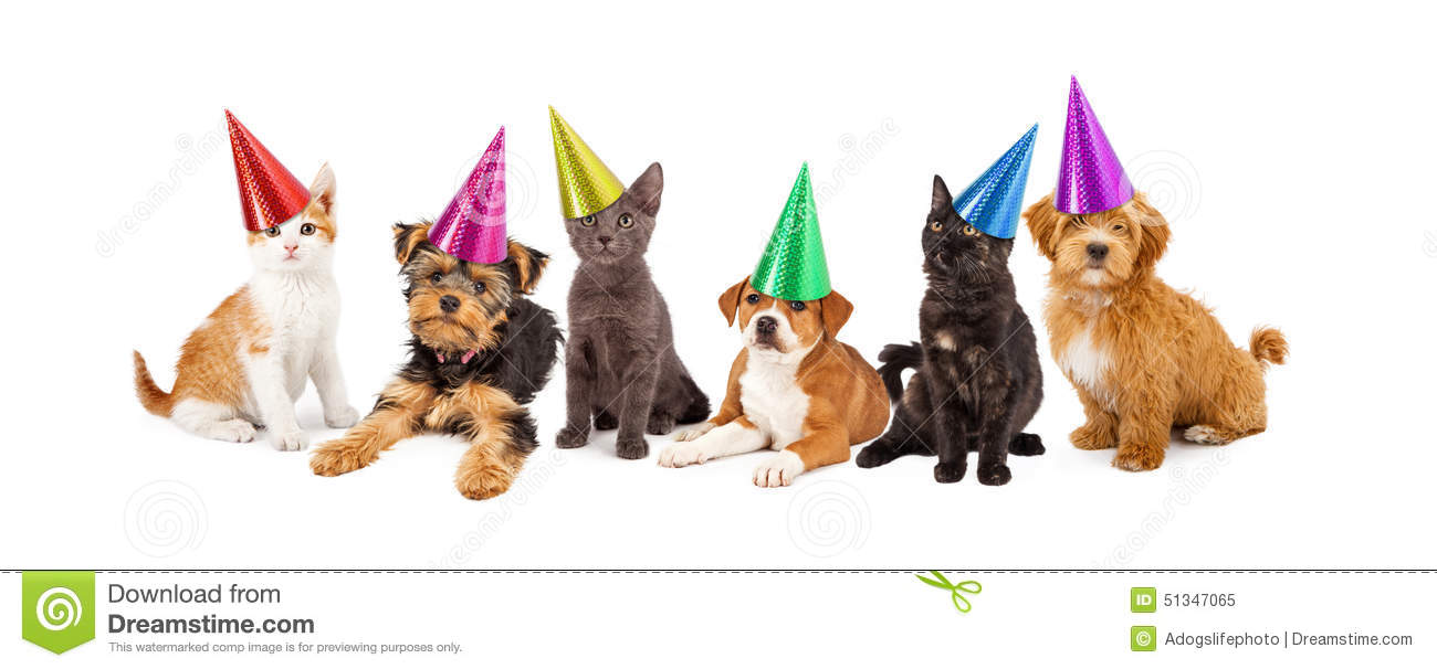 Puppies And Kittens In Party Hats Stock Photo Image