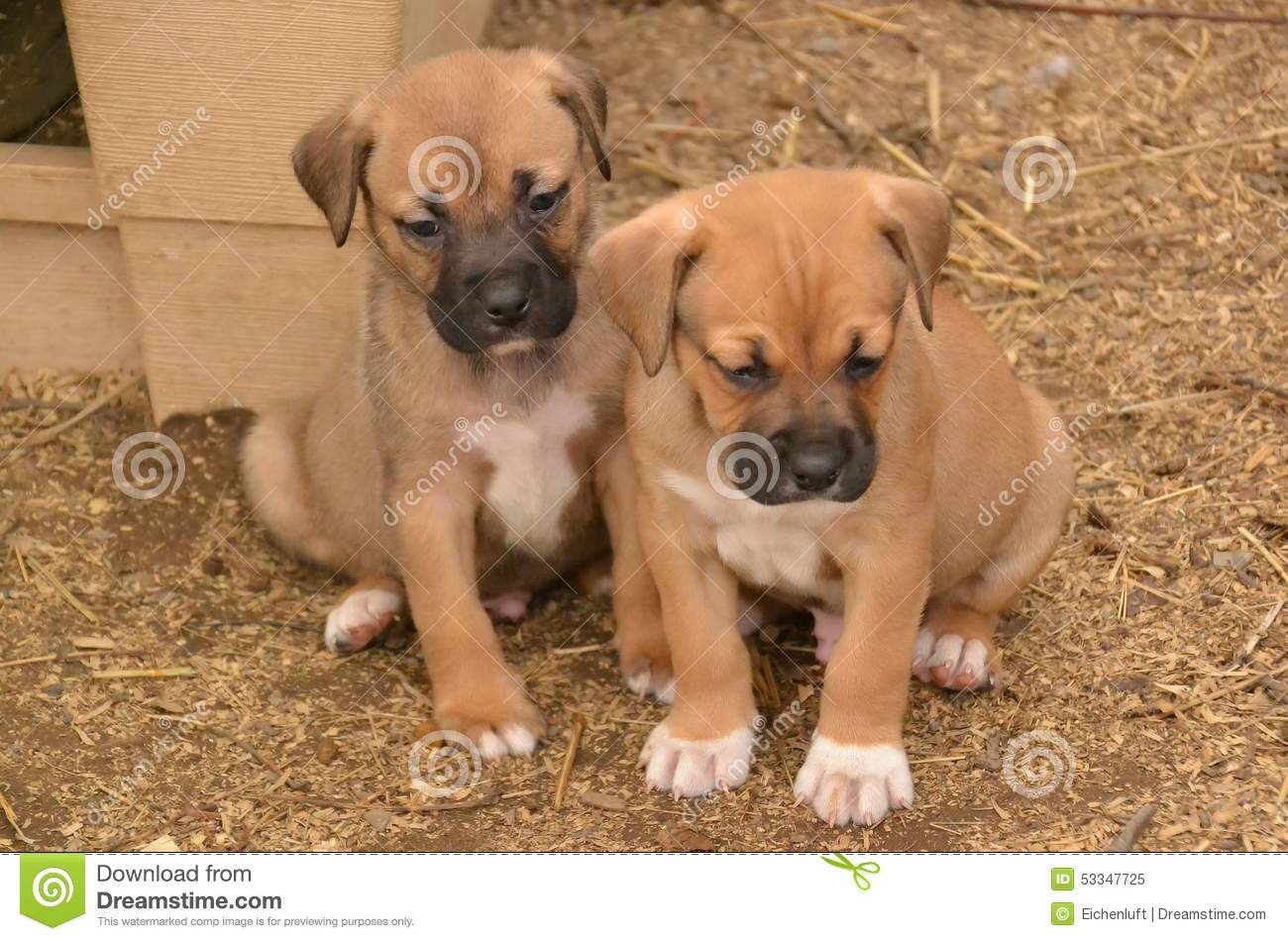 Puppies0001 stock image  Image of youngster, trusting - 53347725