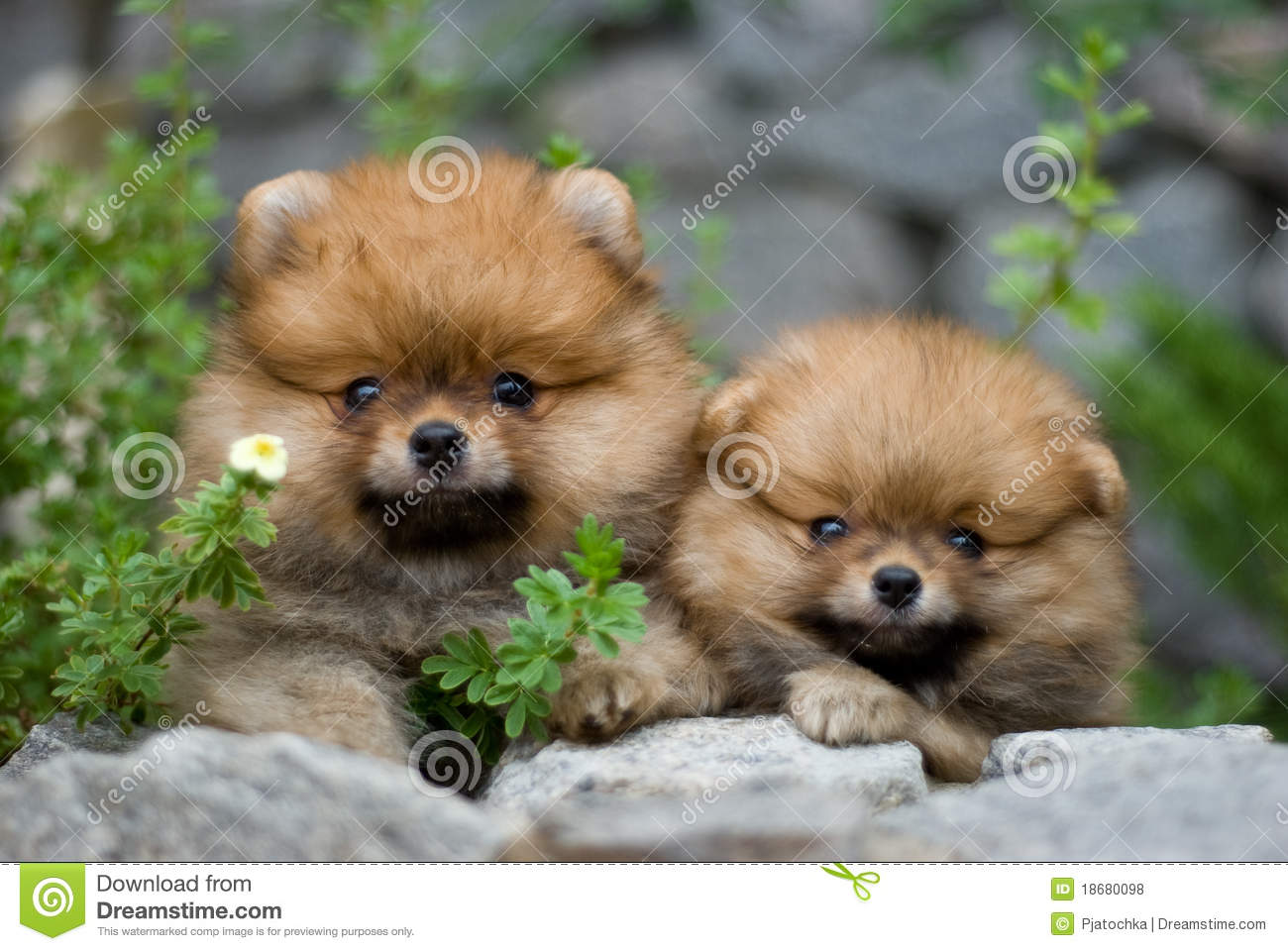 Puppies in nature
