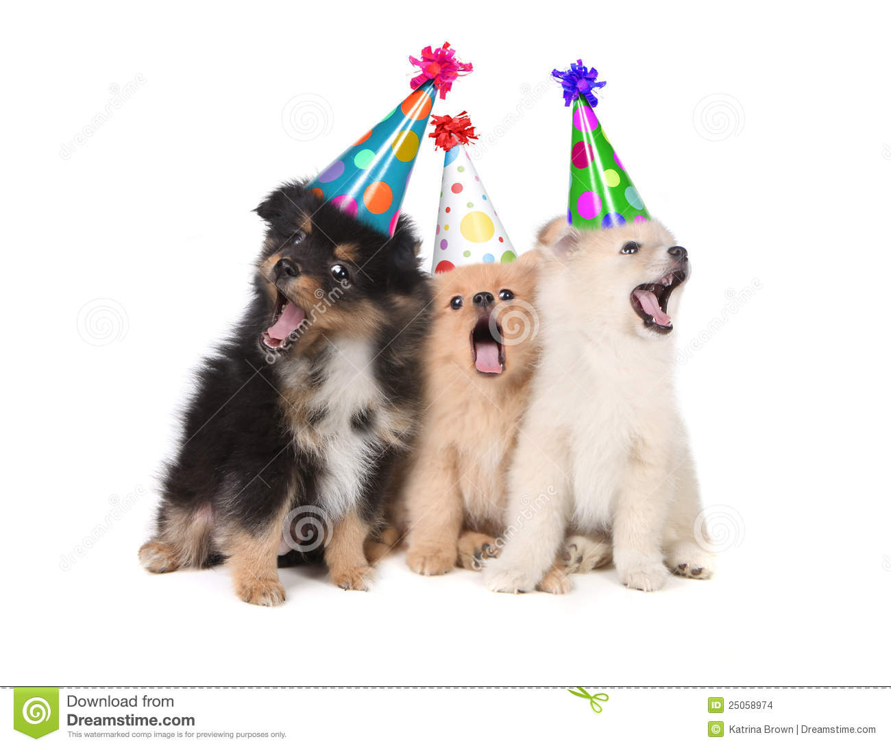 Humorous Puppies Singing The Happy Birthday Song Wearing Silly Hats