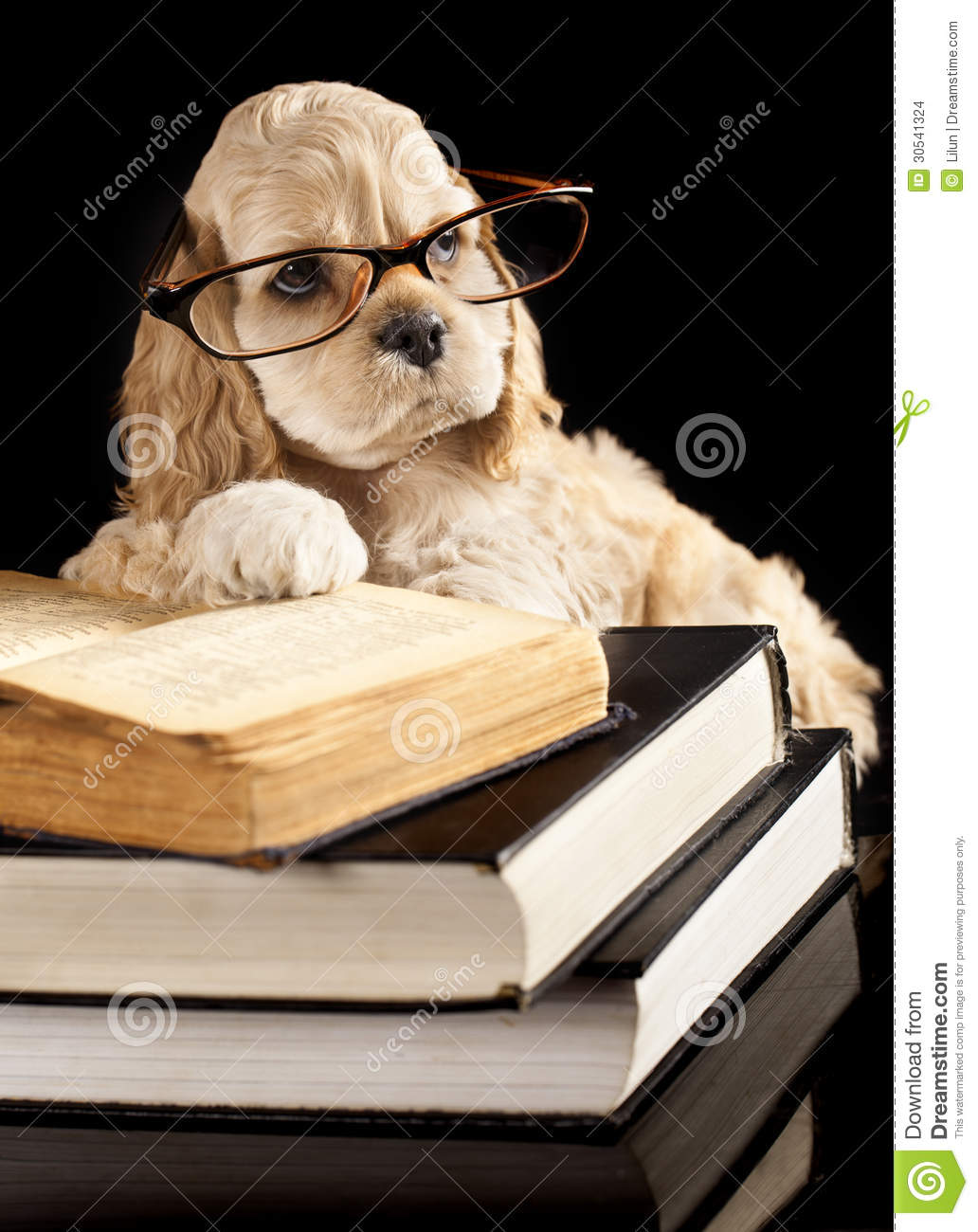 Cute Puppy Wearing Glasses