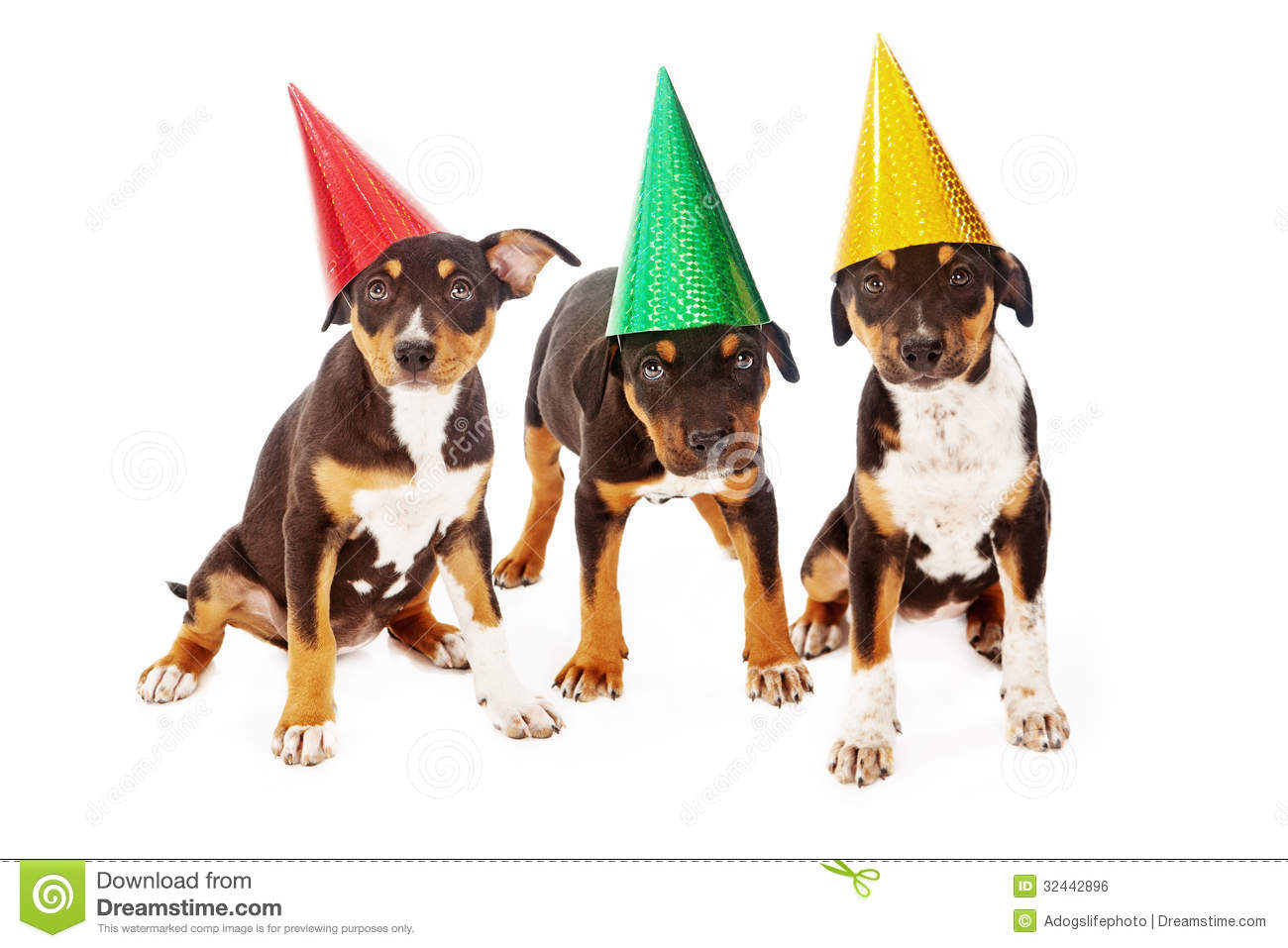 Puppy Birthday Party Stock Photo Image Of Domestic Obedience