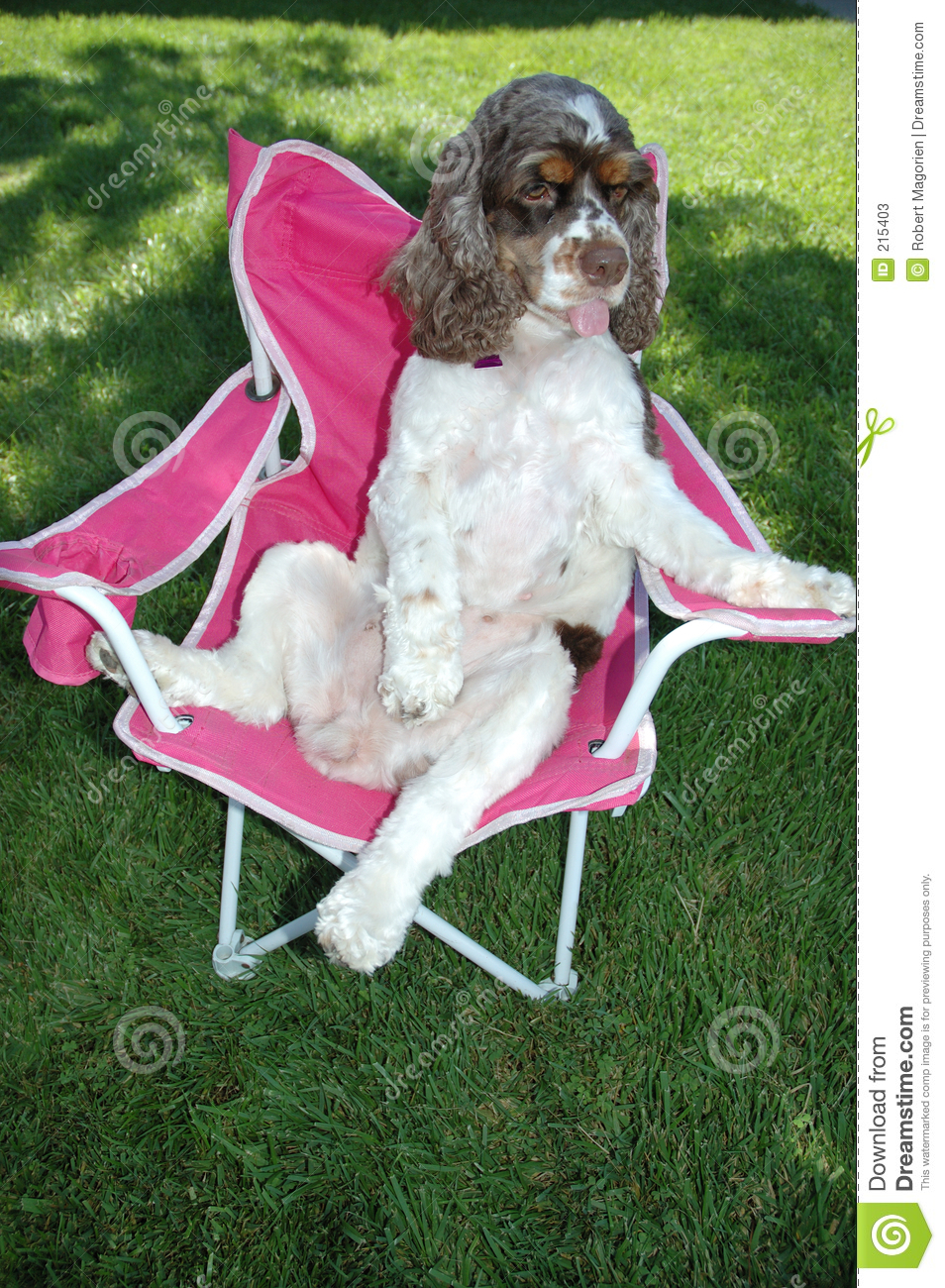 Puppy Dog Relaxing On A Chair Royalty Free Stock Photo