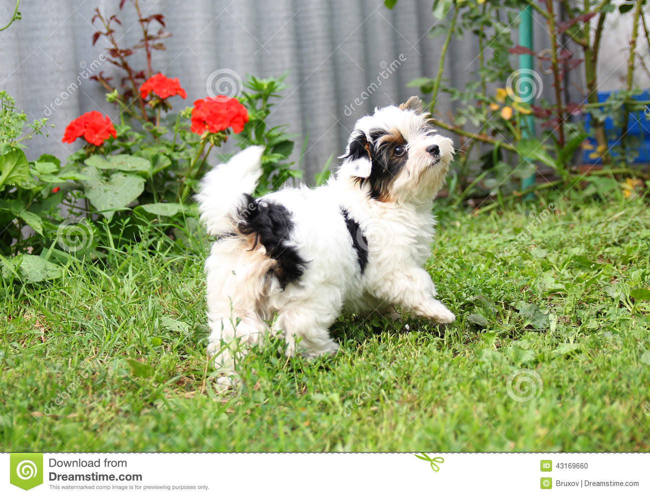 Puppy stock photo image 43169660 for Cheerful nature