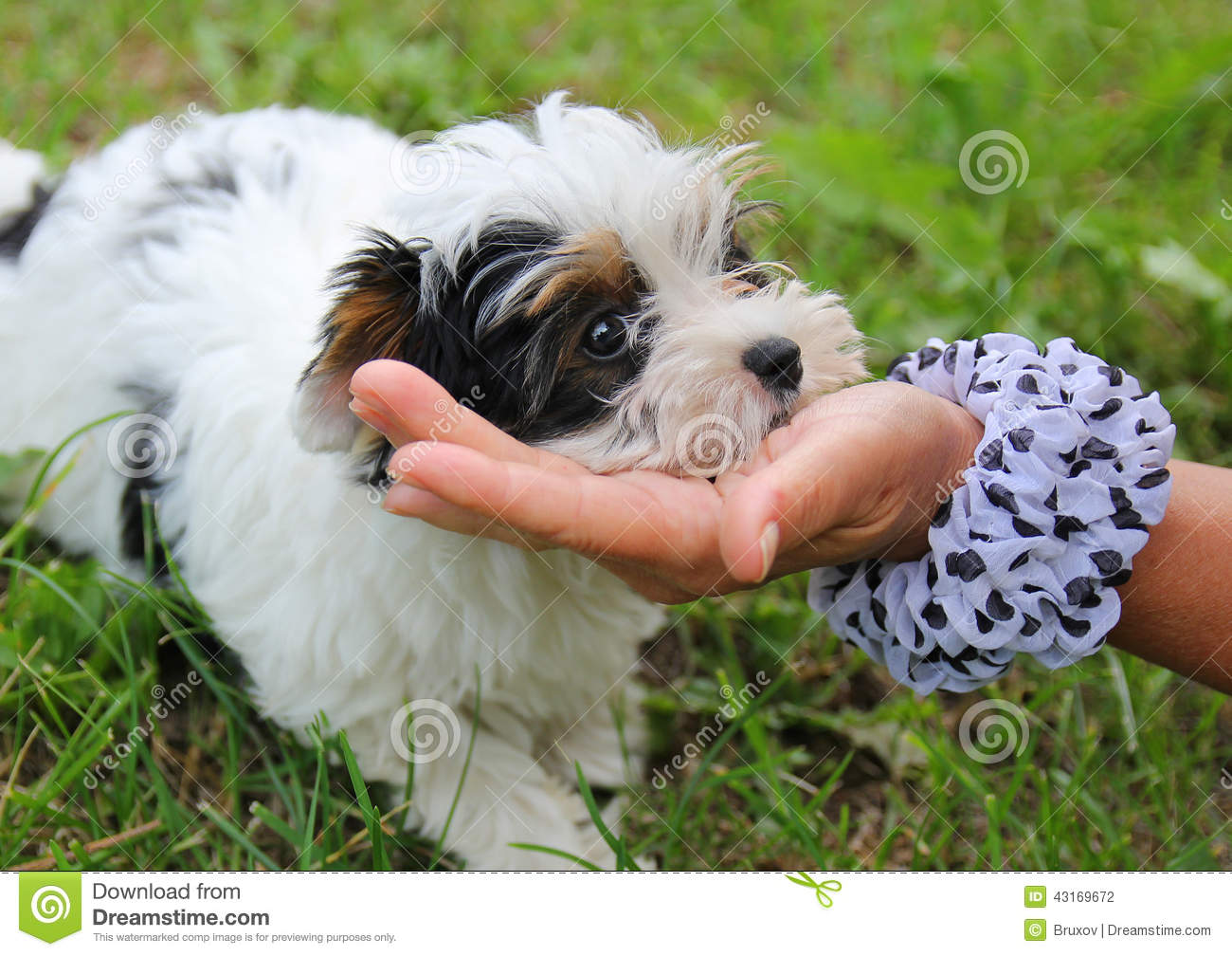 Puppy stock photo image 43169672 for Cheerful nature