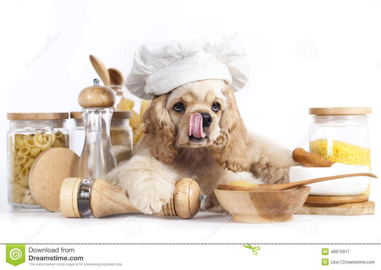 Puppy In Chef S Hat Stock Photo Image 48975917