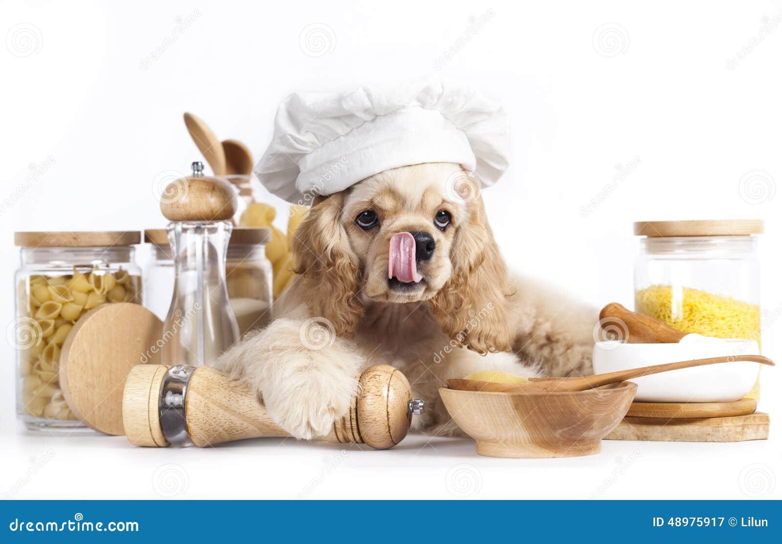 puppy in chef u0026 39 s hat stock photo