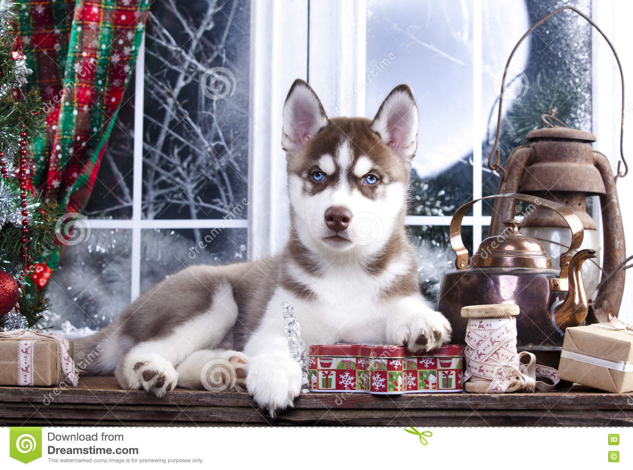 download puppy and christmas decorations stock image image of husky playful 80978529