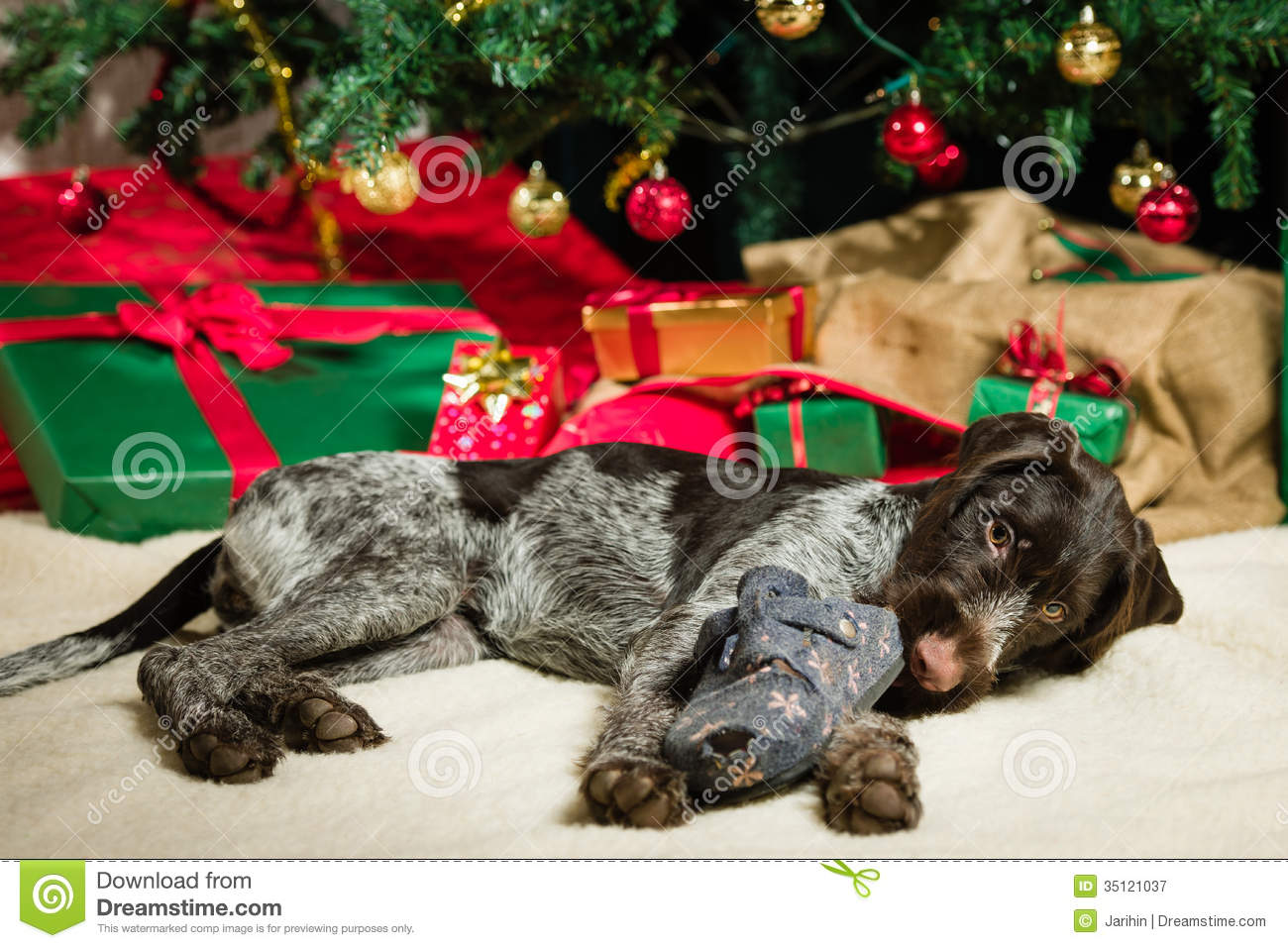 Puppy And Christmas Tree Stock Image Image Of Contact