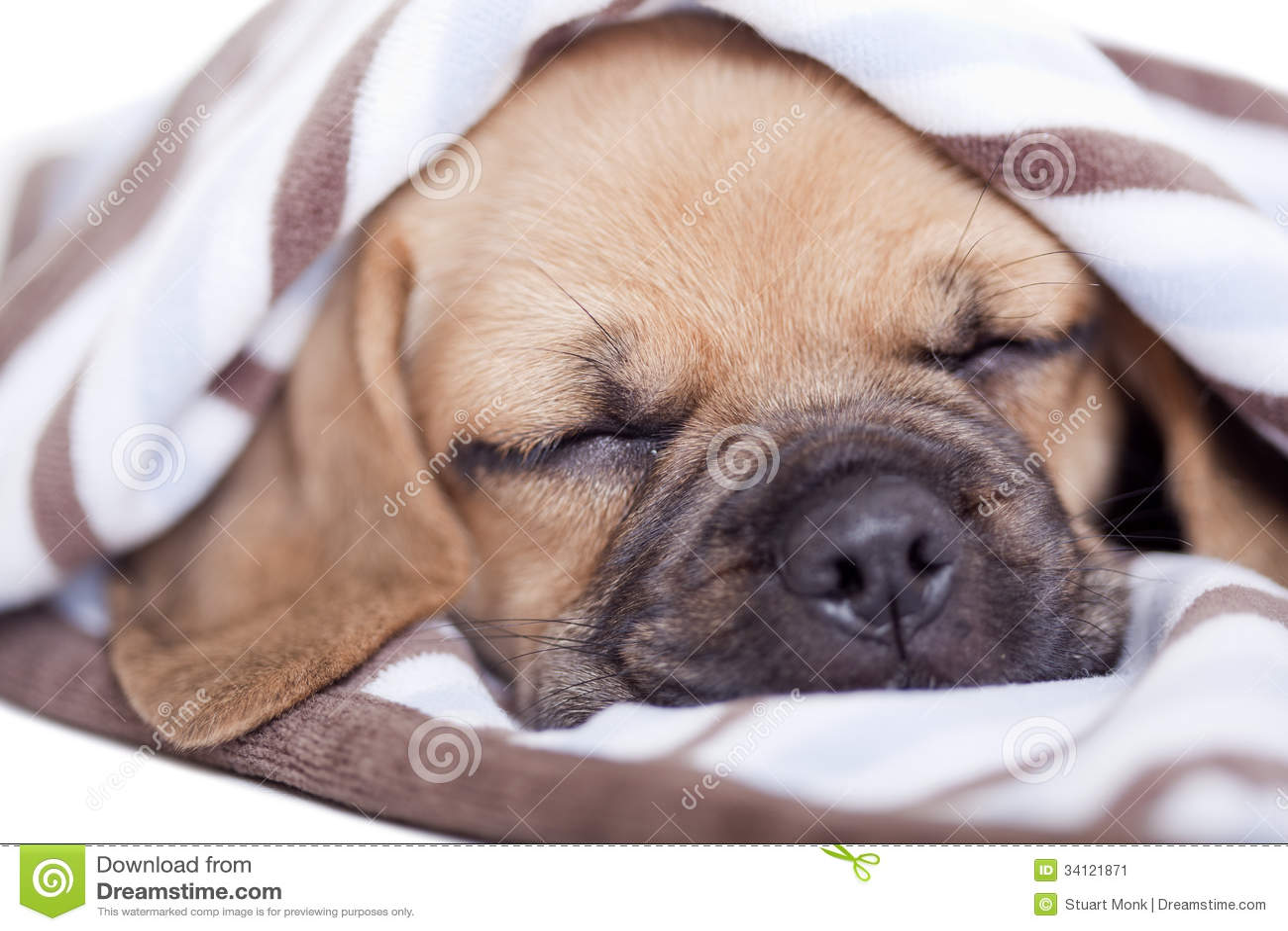 Puppy Stock Image - Image: 34121871  White