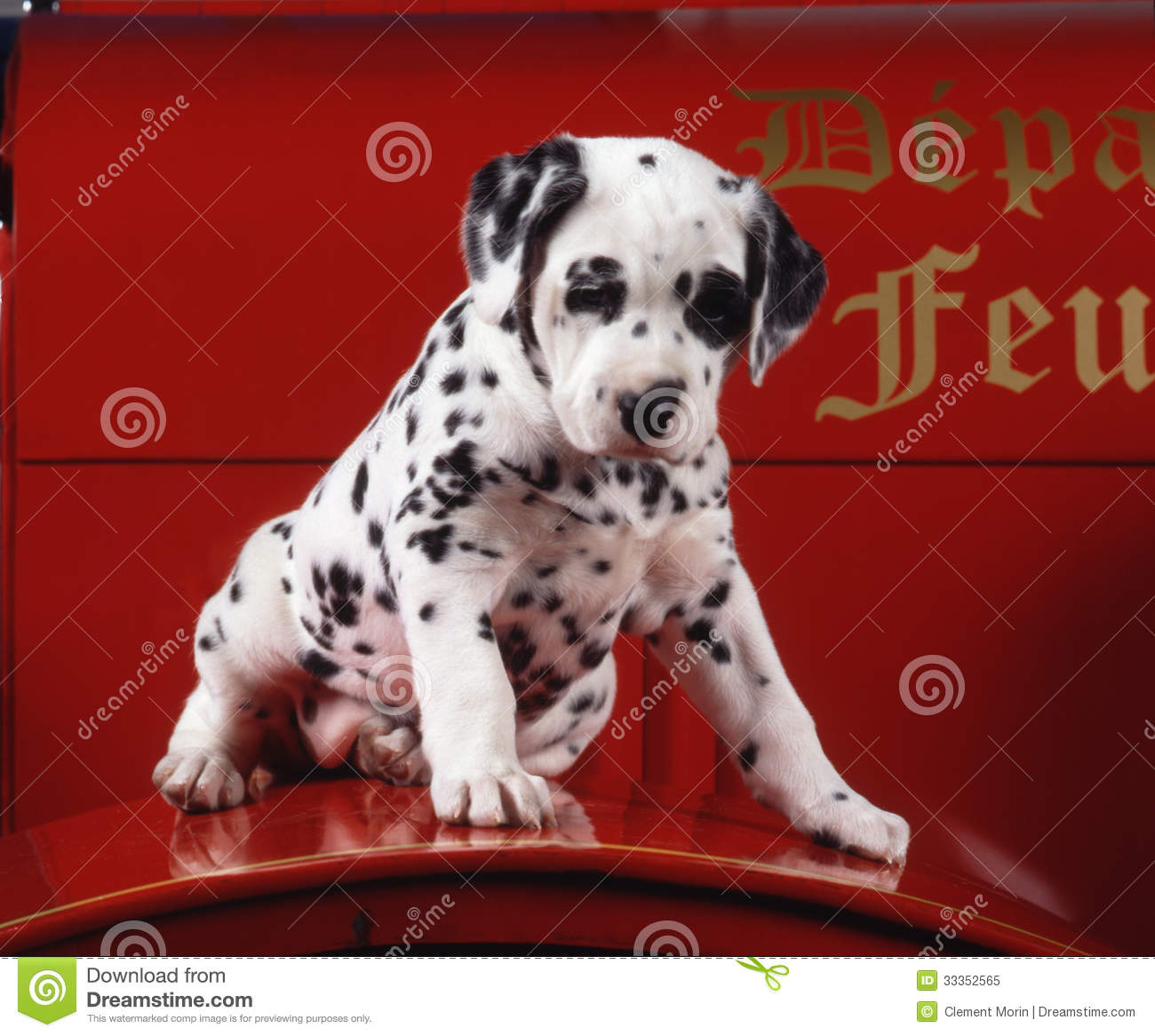 Puppy Dalmation On A Fire Truck Royalty Free Stock Photo - Image ...