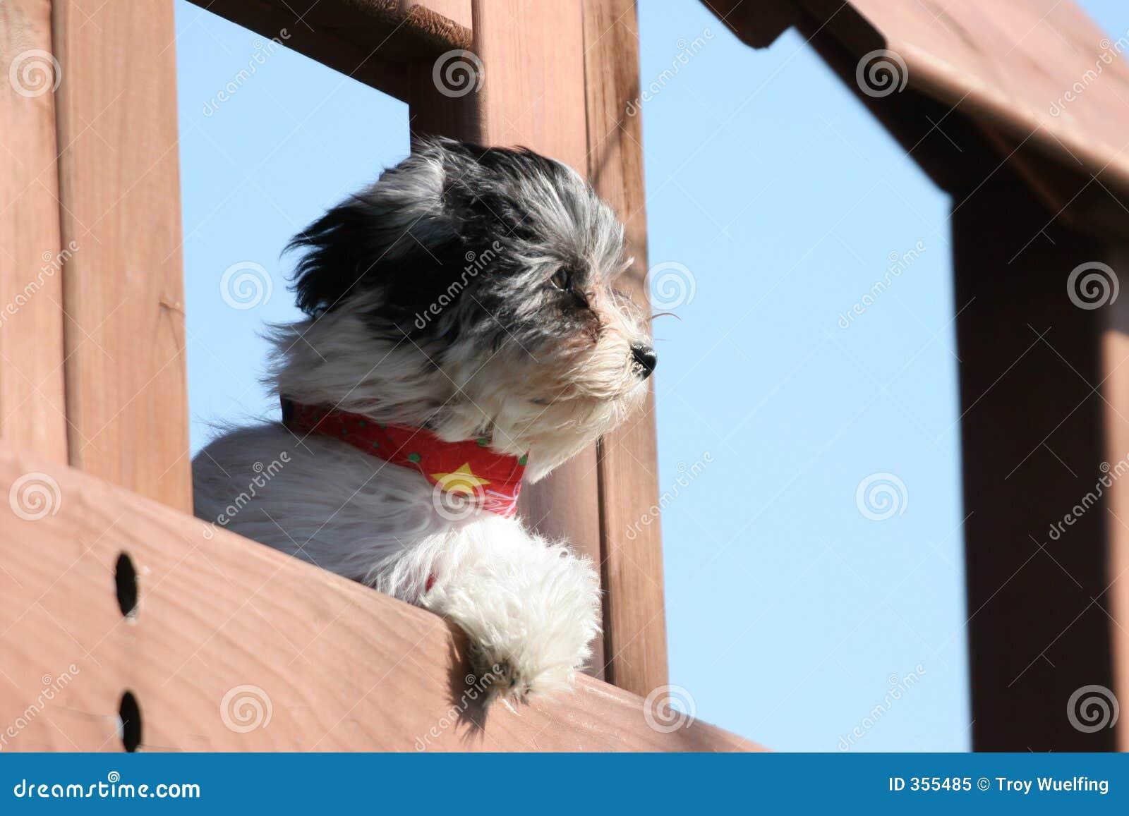 Puppy dat de afstand onderzoekt