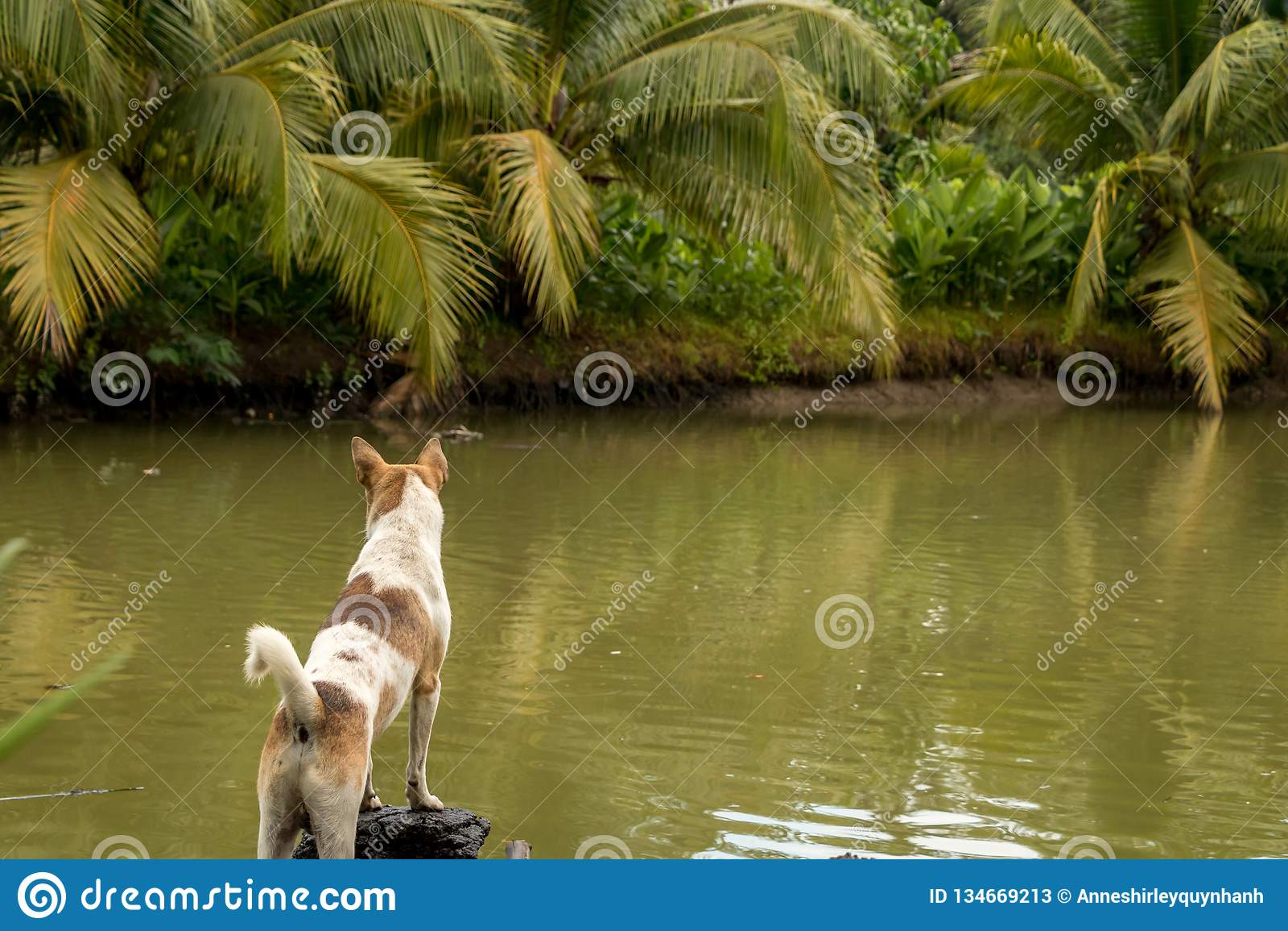 Puppy die zich door Groene Vijver met Kokospalmen en Tropische Installaties bevinden
