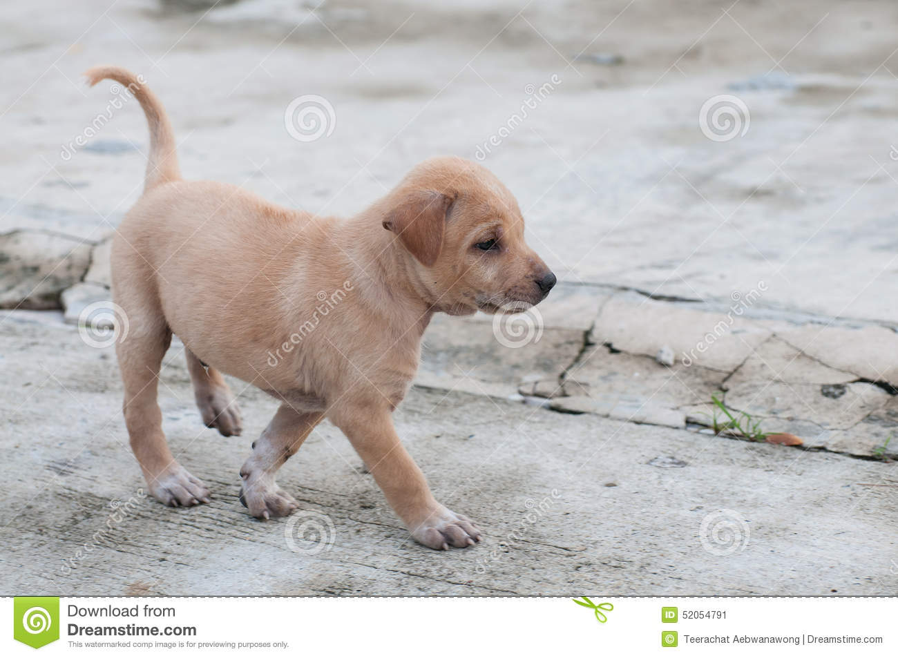 Puppy Dog Alone On The Street Stock Image Image Of Happy