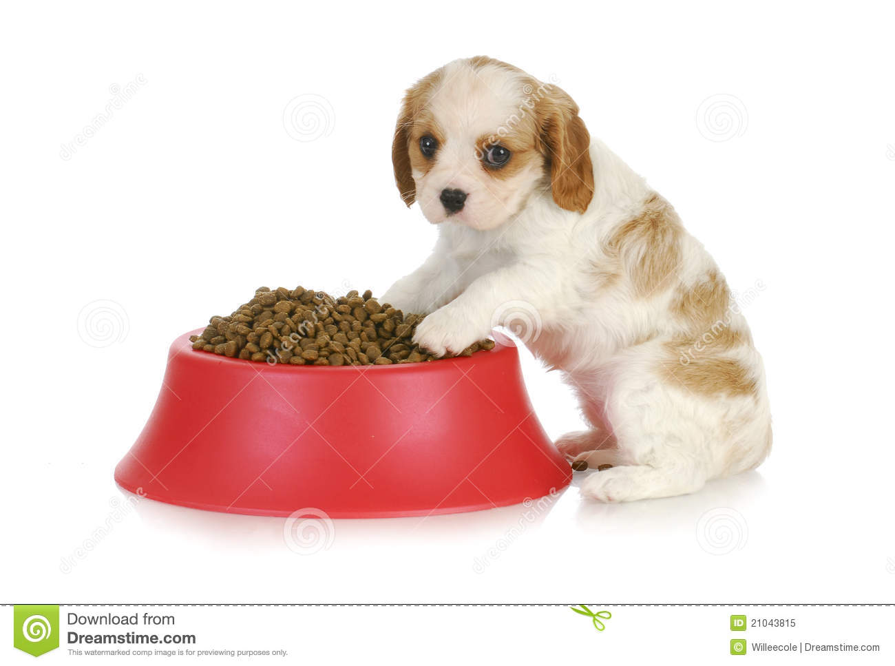 Puppy With Dog Food Bowl Royalty Free Stock Photo - Image ...