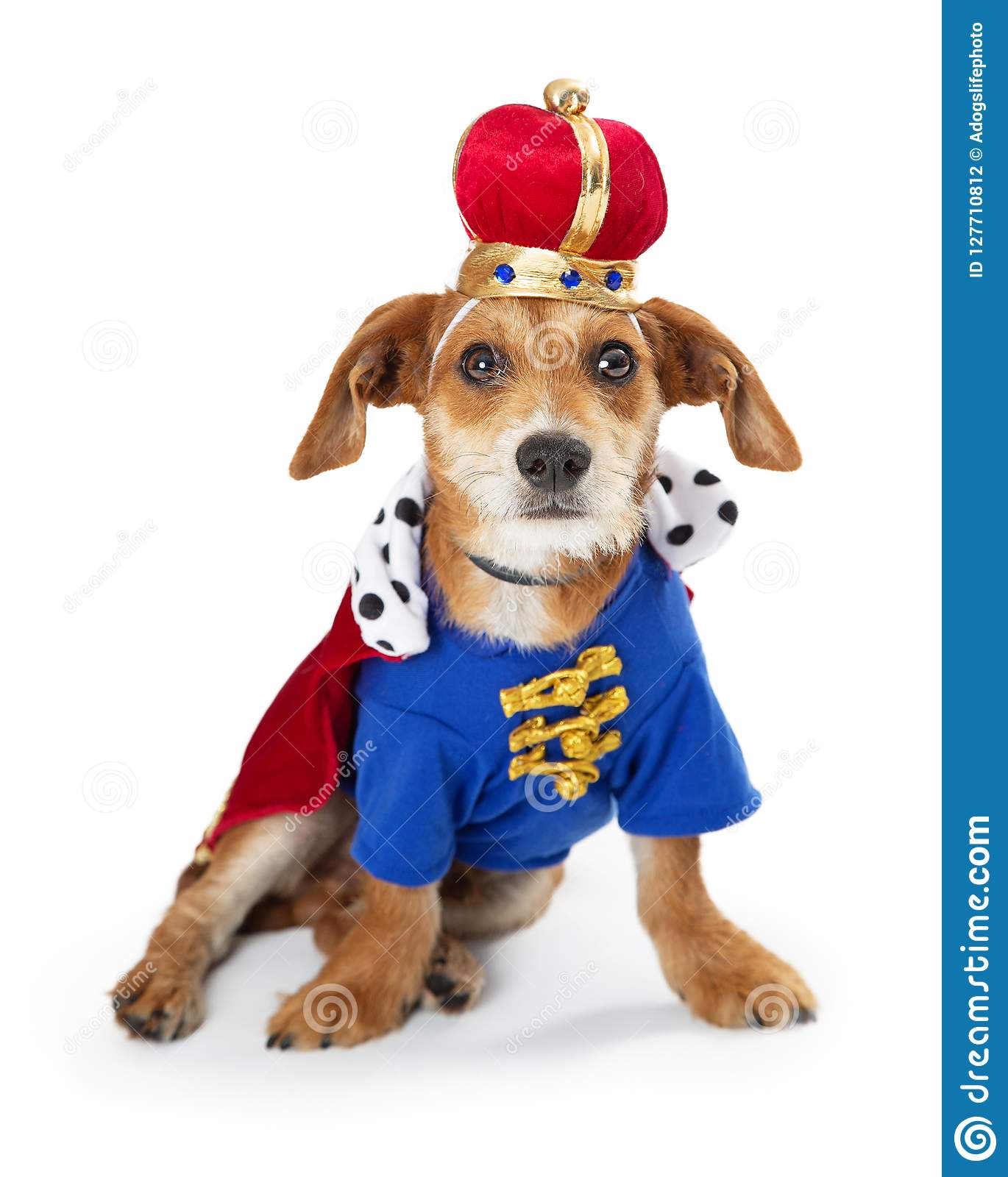 Puppy Dog Wearing King Halloween Costume