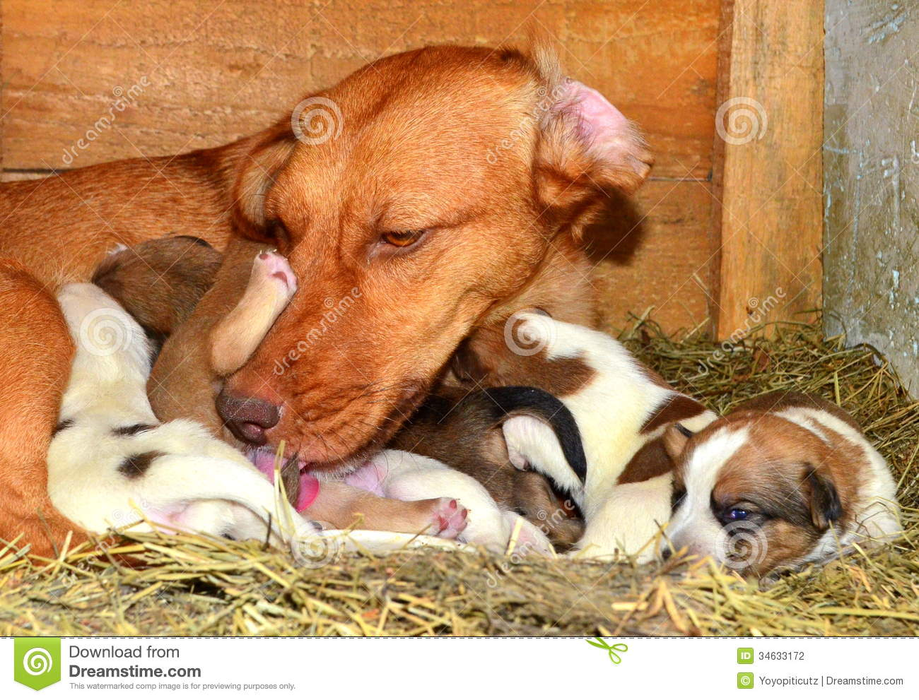 Are woman breast feeding dog thought