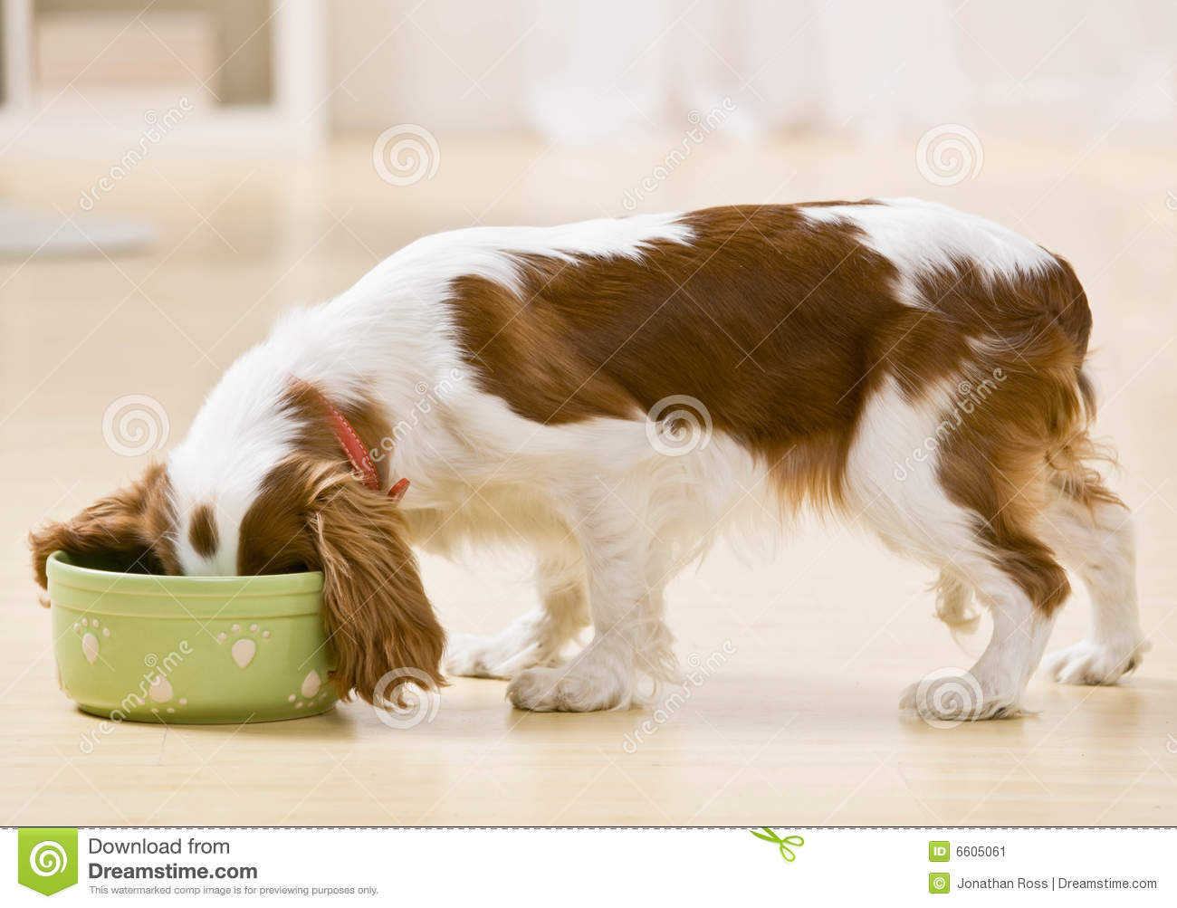 Puppy eating from dog dish