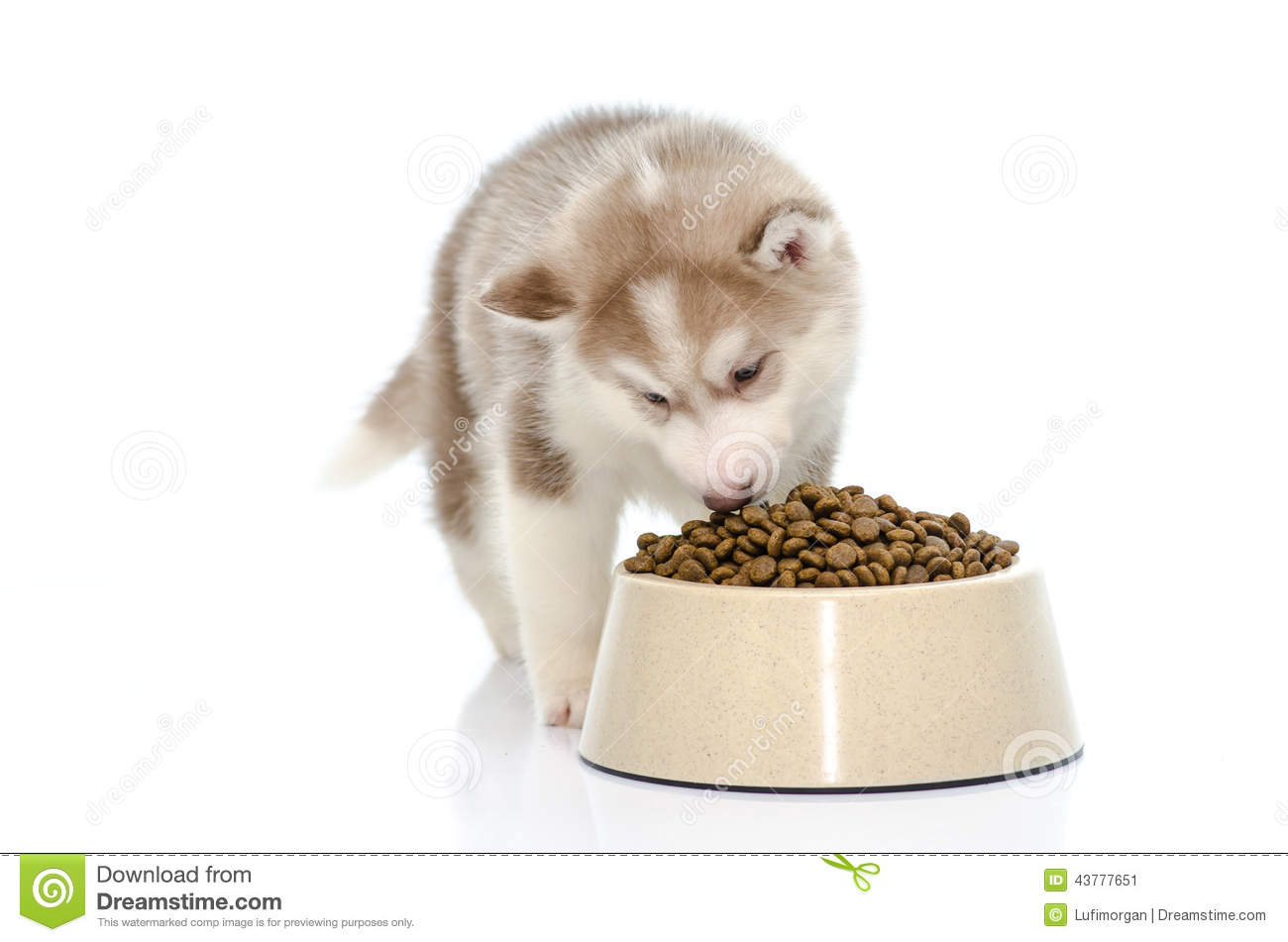 how to food train a puppy