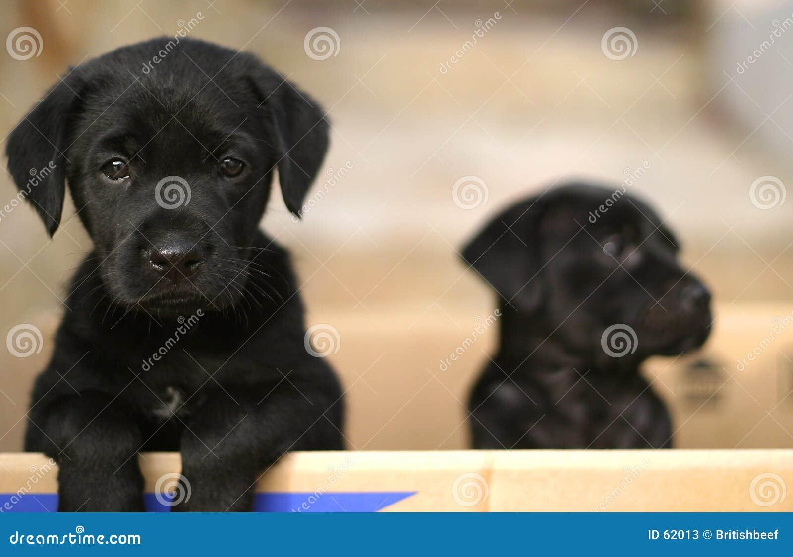 Puppy in een doos