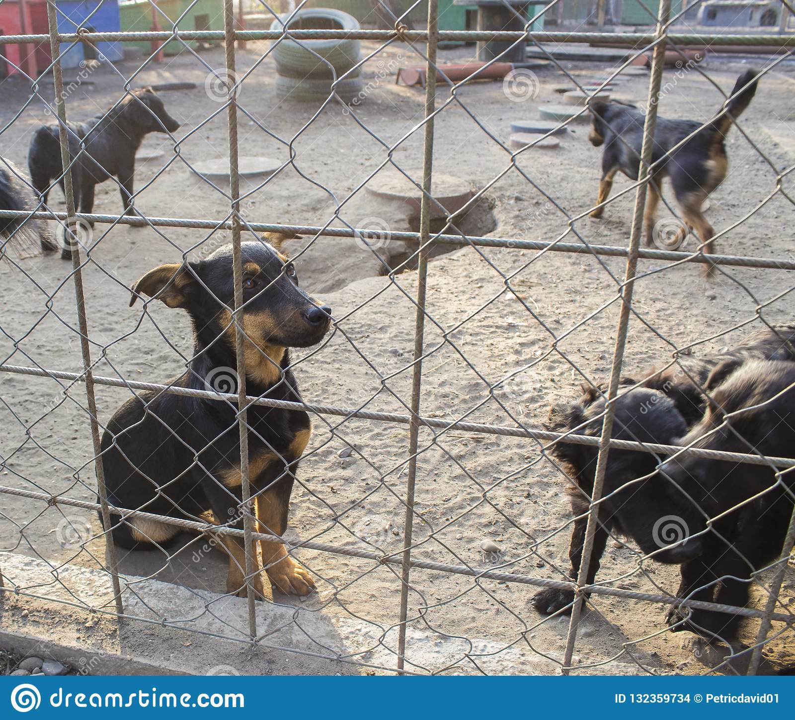 Puppy in een Schuilplaats