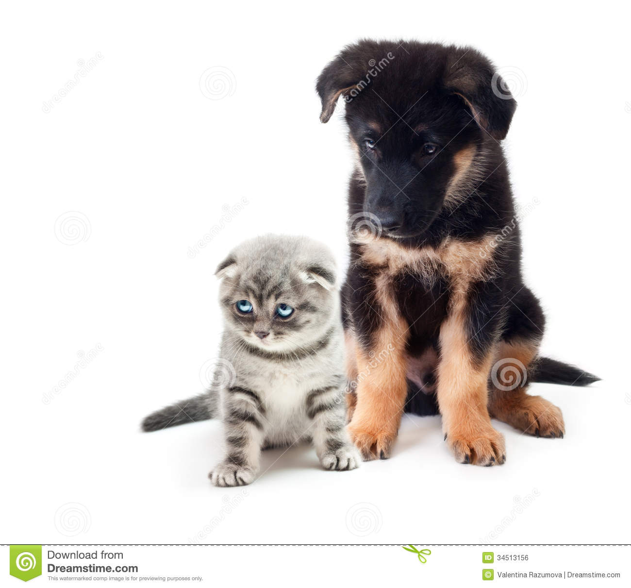 Puppy German Shepherd Dog And A Cat. Royalty Free Stock Image - Image ...