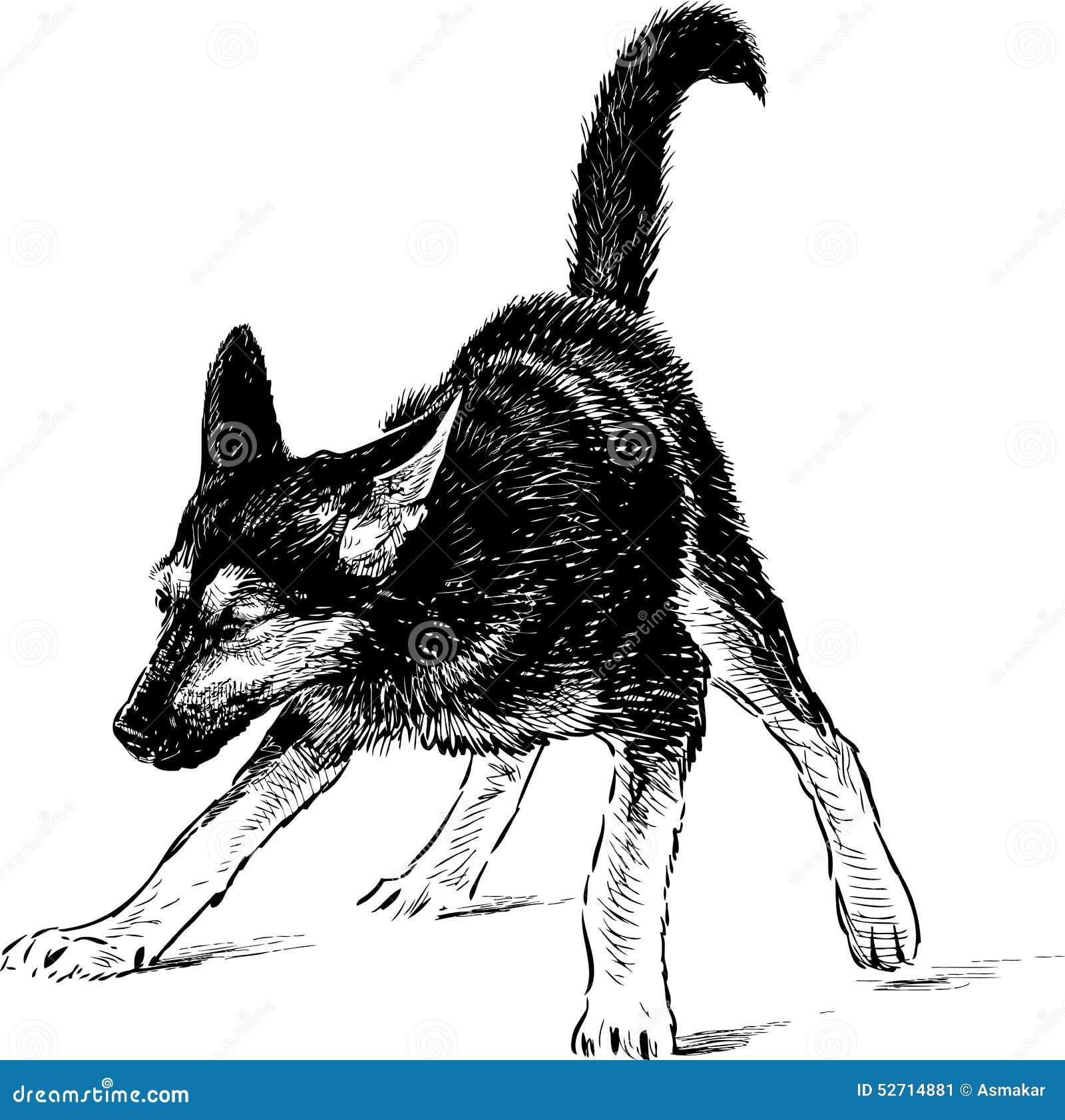 Puppy Of A German Shepherd Stock Vector Illustration Of Walk 52714881 - German-shepherd-drawings