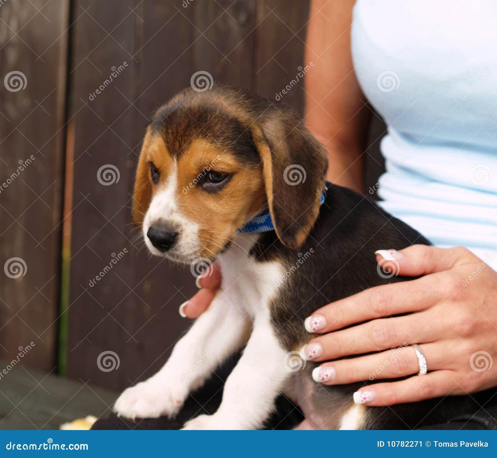 Puppy in handen