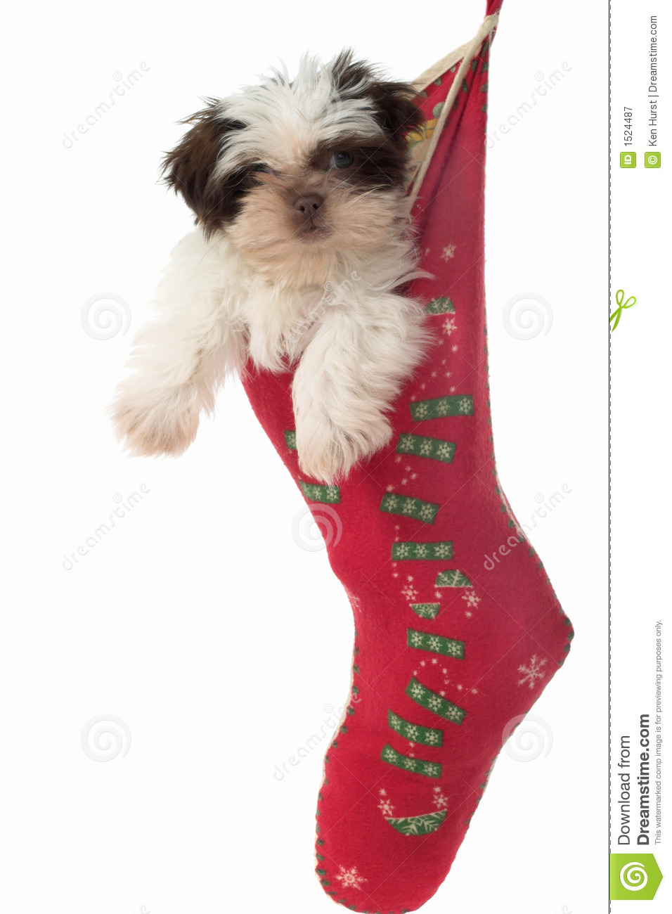 Christmas Stocking Dog