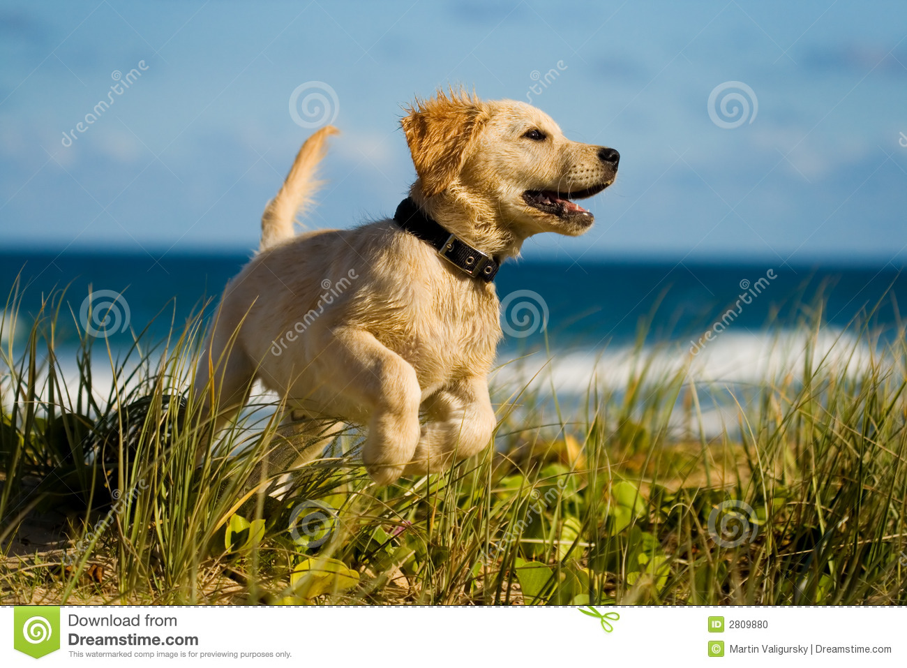 Puppy jumping on the beach