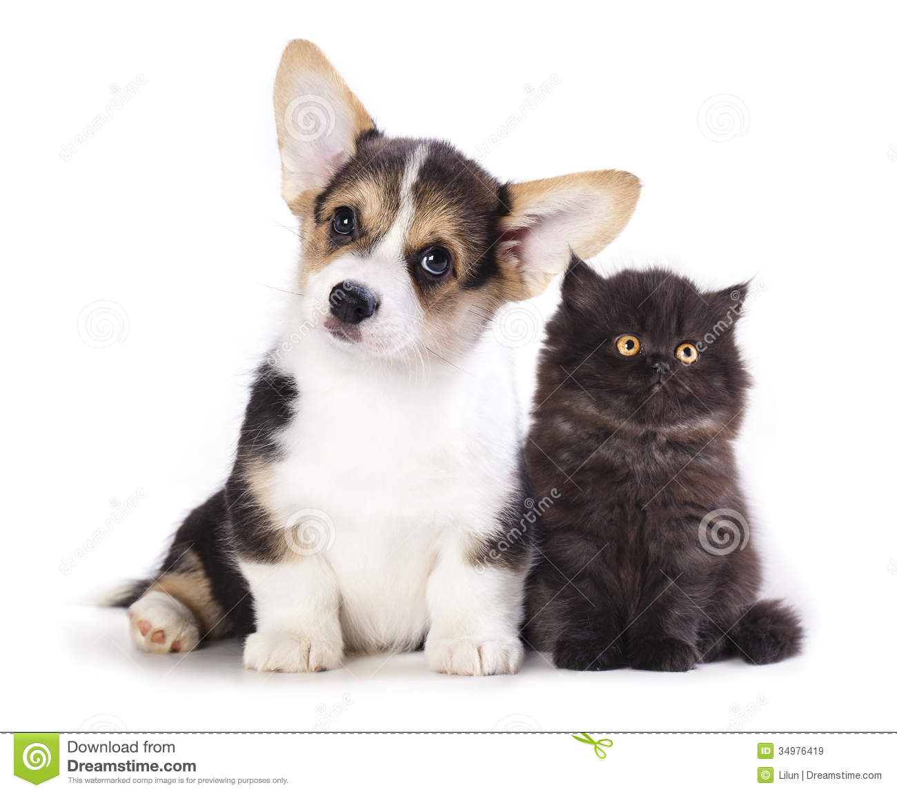 Puppy And Kitten Stock Image Image Of Carnivore Furry 34976419