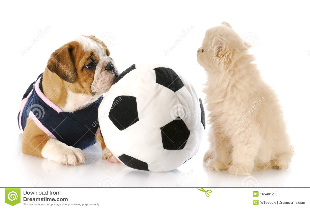 Puppy And Kitten Playing Together Royalty Free Stock Image ...