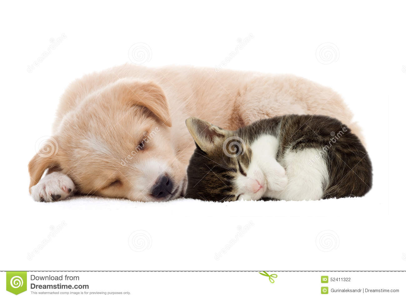 Puppy And Kitten Sleeping Puppy and kitte...