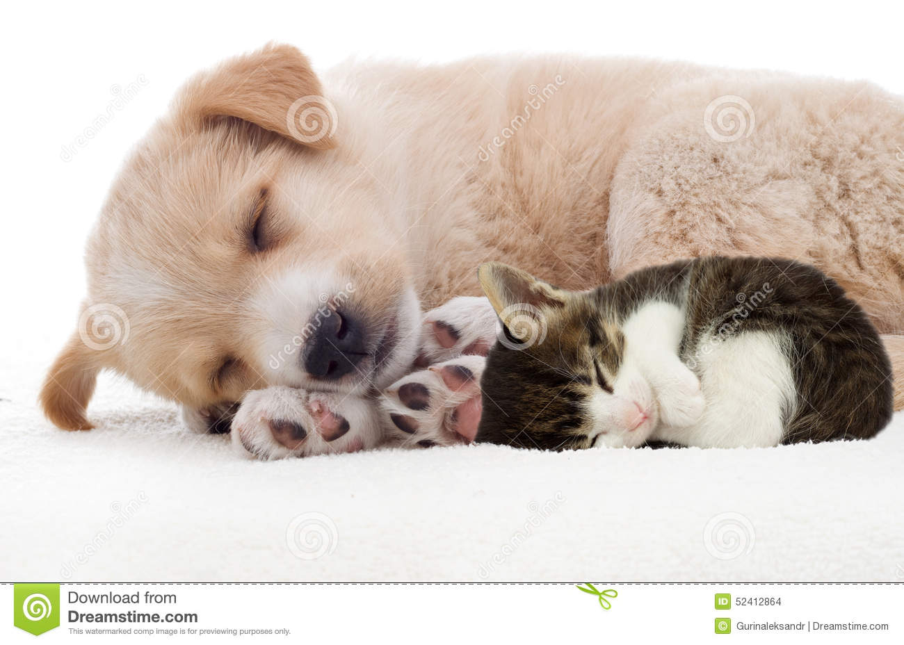 Puppy And Kitten Sleeping Stock Photo Image Of Sleeping 52412864
