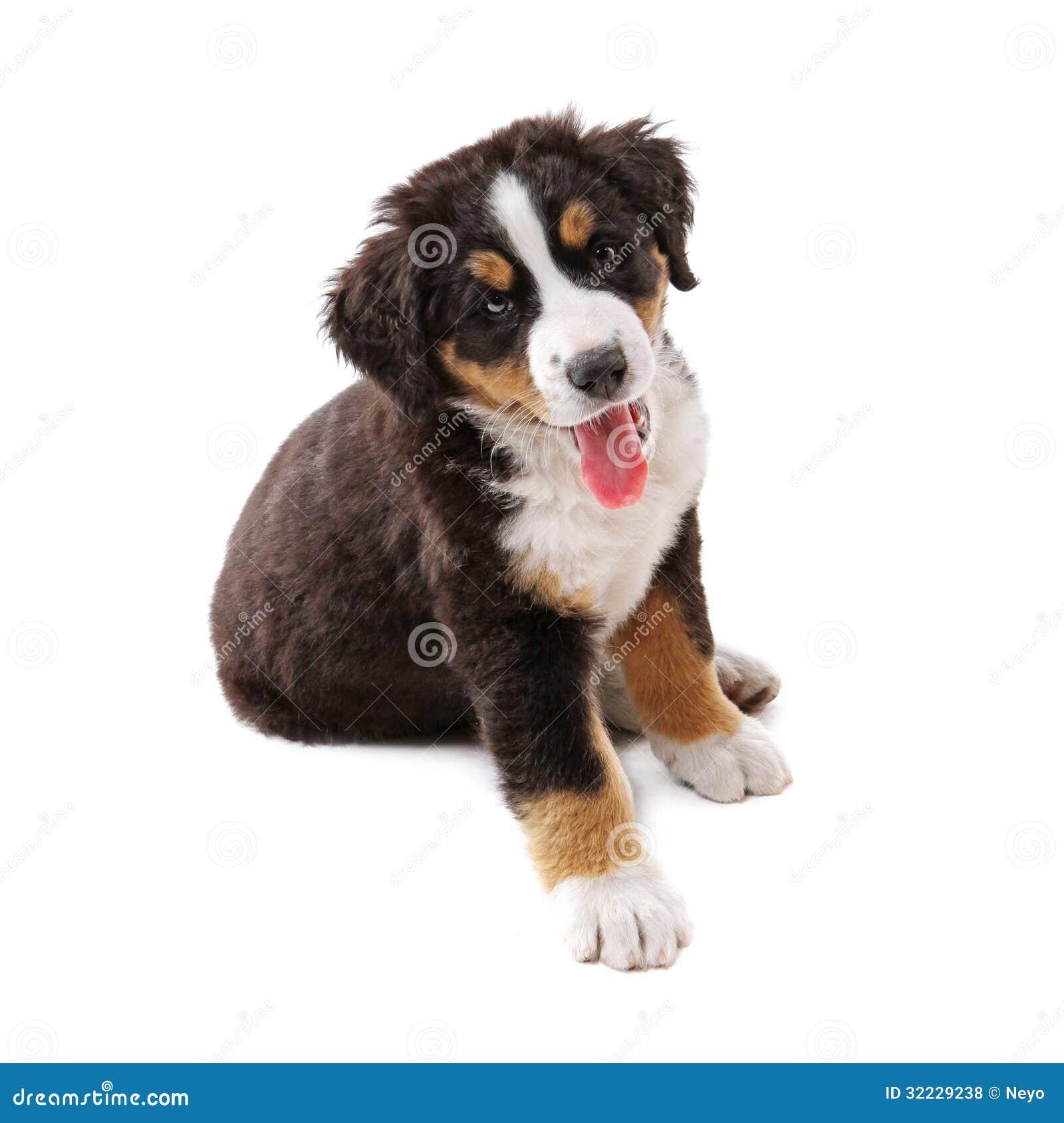 Free Clipart Pug Dog