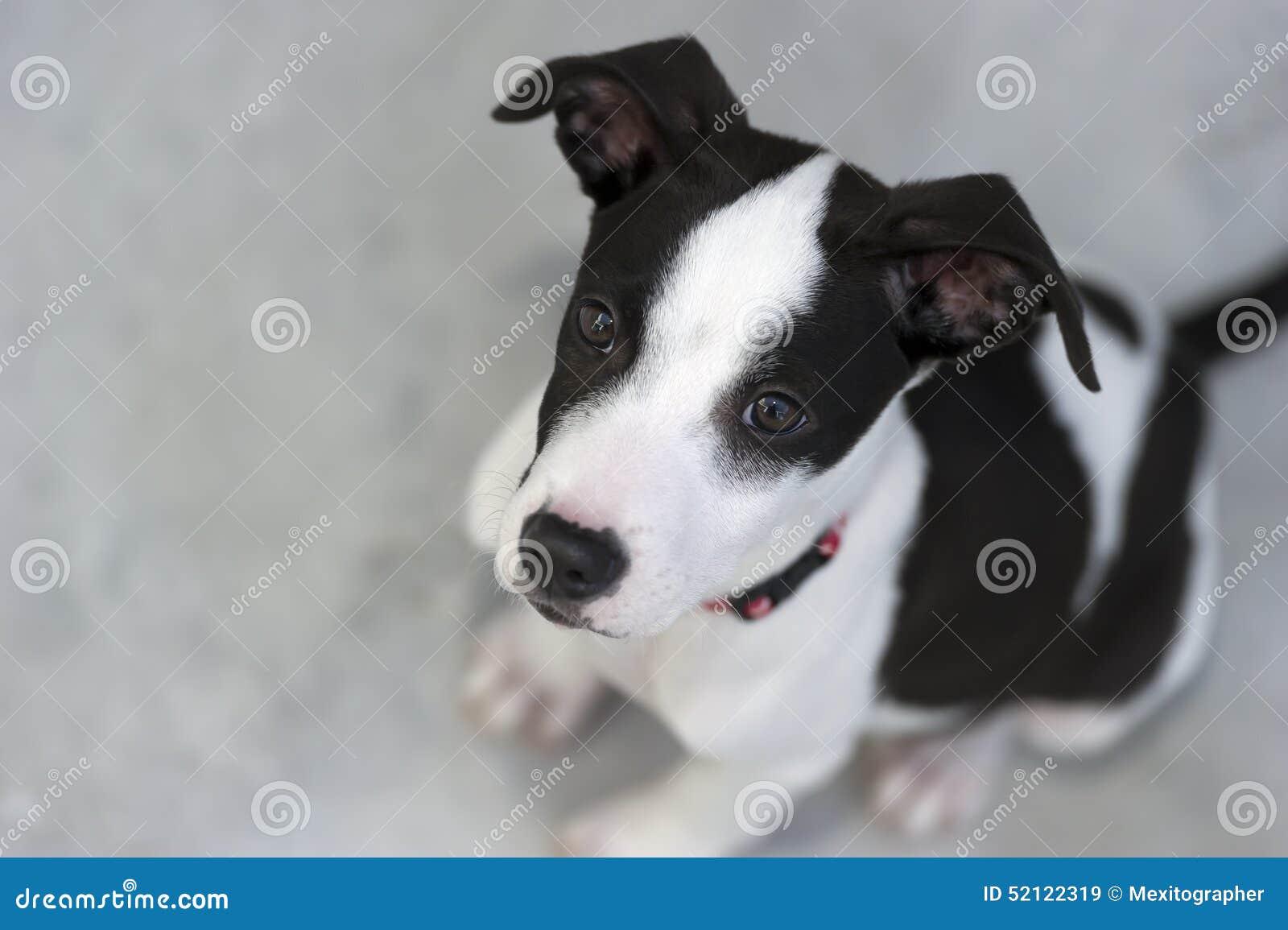 Dog Breed Big Eyes