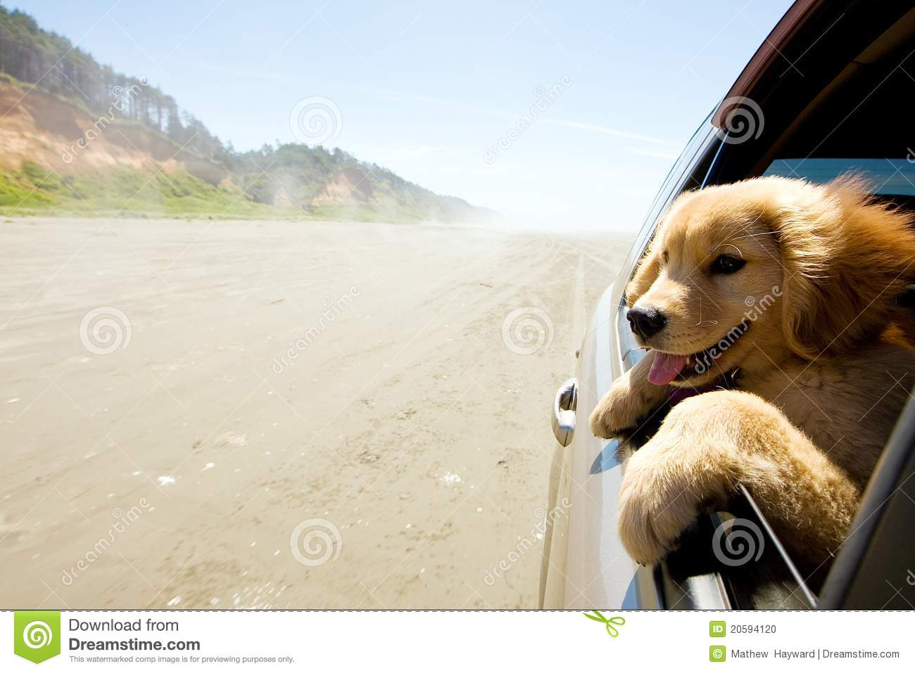 Puppy looking out window of car