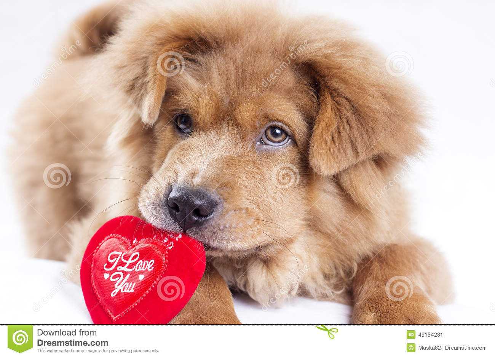 puppy love stock photo image 49154281 puppy dog pals clip art pet dog clip art