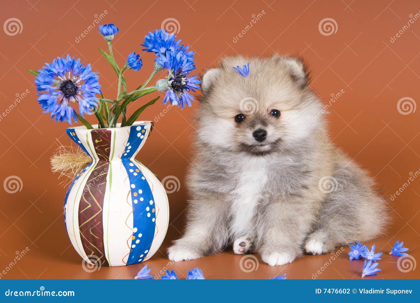 Puppy met een vaas
